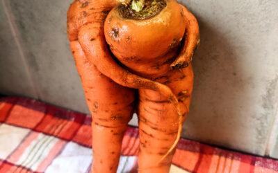 Karottenfreundschaft