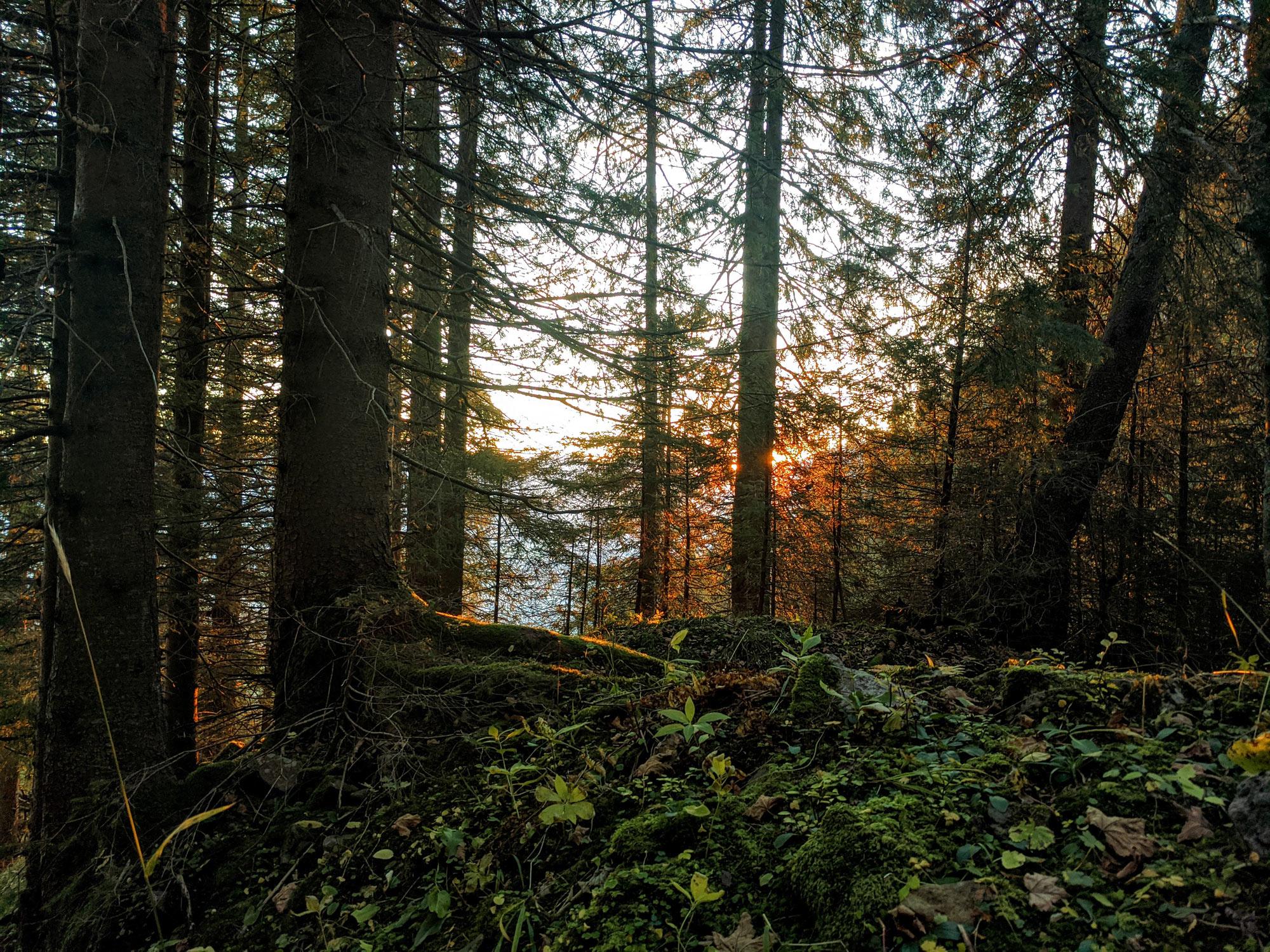 Sonnenuntergang vom Grünten