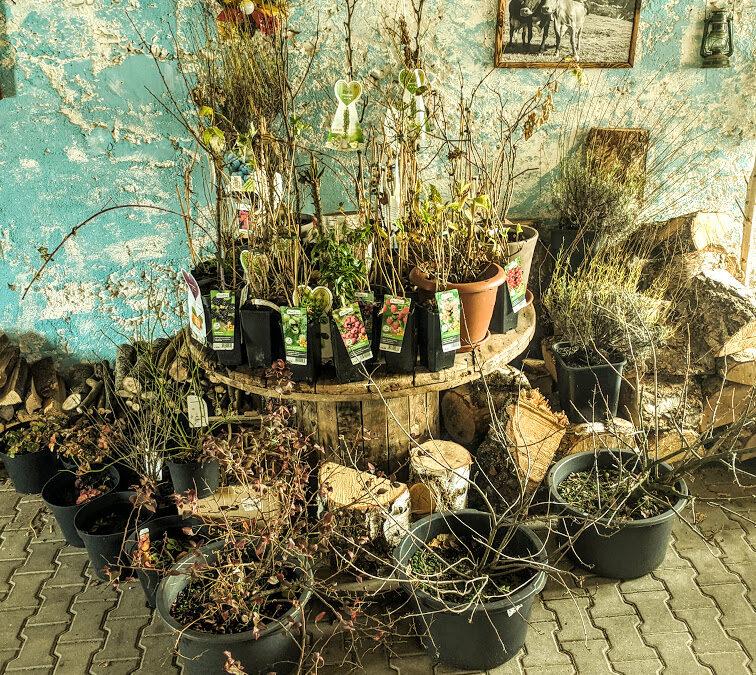 Vorbereitungen auf den Frühling