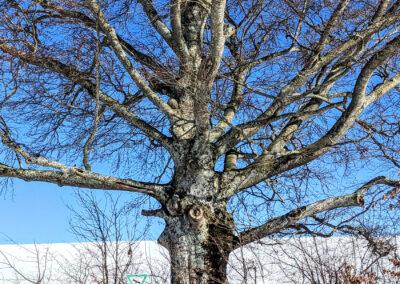 Bachtelrundweg Naturdenkmal