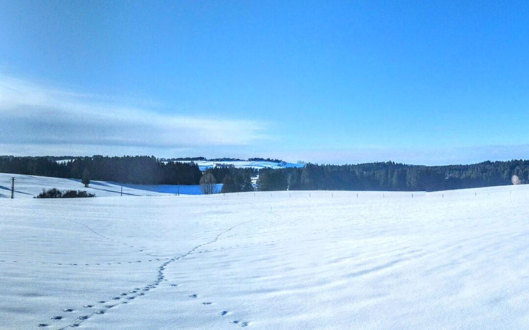 Spaziergang: Kurzer Bachtelrundweg vom Quellhof